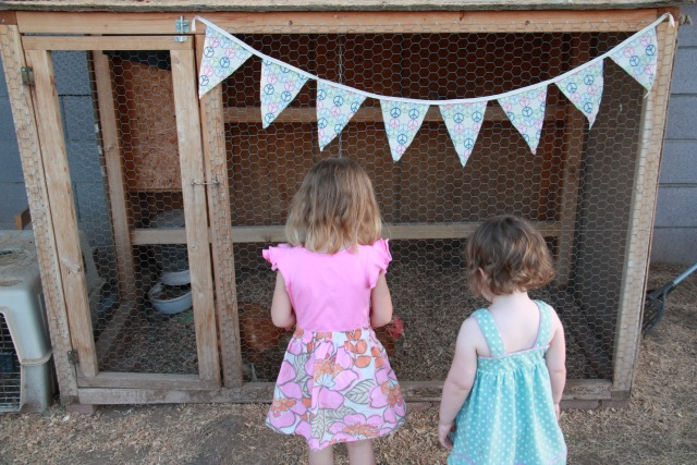 Backyard Chickens :: Five Little Homesteaders