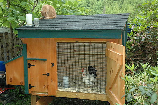 A Cheap, New Run for the Baby Chickens
